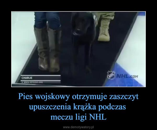 Pies wojskowy otrzymuje zaszczyt upuszczenia krążka podczas meczu ligi NHL –