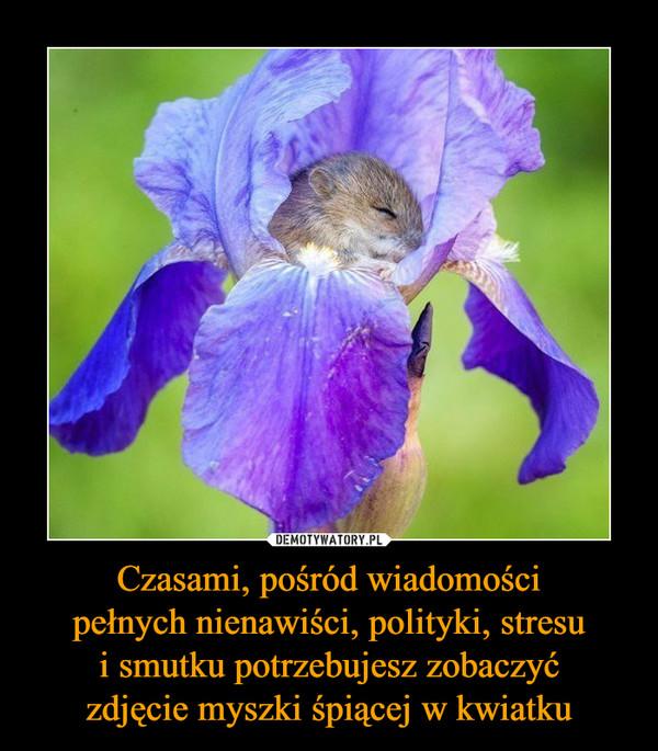 Czasami, pośród wiadomościpełnych nienawiści, polityki, stresui smutku potrzebujesz zobaczyćzdjęcie myszki śpiącej w kwiatku –
