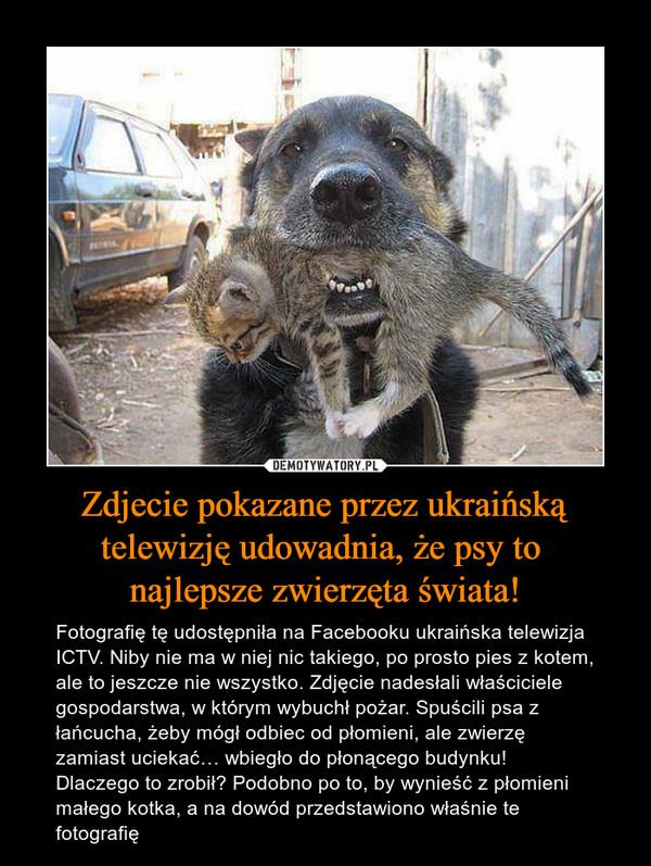 Zdjecie pokazane przez ukraińską telewizję udowadnia, że psy to najlepsze zwierzęta świata! – Fotografię tę udostępniła na Facebooku ukraińska telewizja ICTV. Niby nie ma w niej nic takiego, po prosto pies z kotem, ale to jeszcze nie wszystko. Zdjęcie nadesłali właściciele gospodarstwa, w którym wybuchł pożar. Spuścili psa z łańcucha, żeby mógł odbiec od płomieni, ale zwierzę zamiast uciekać… wbiegło do płonącego budynku! Dlaczego to zrobił? Podobno po to, by wynieść z płomieni małego kotka, a na dowód przedstawiono właśnie te fotografię