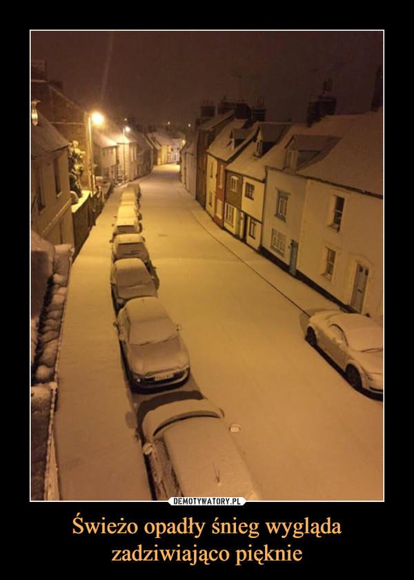 Świeżo opadły śnieg wygląda zadziwiająco pięknie –
