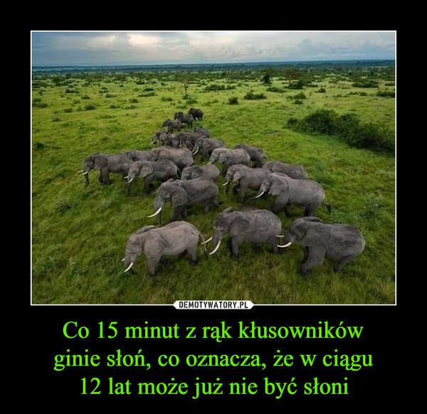 Co 15 minut z rąk kłusownikówginie słoń, co oznacza, że w ciągu12 lat może już nie być słoni –