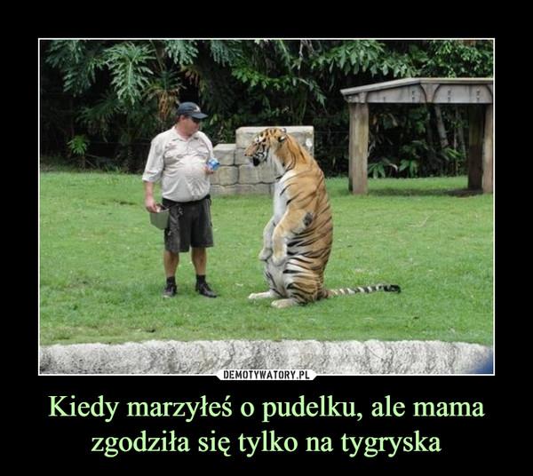 Kiedy marzyłeś o pudelku, ale mama zgodziła się tylko na tygryska