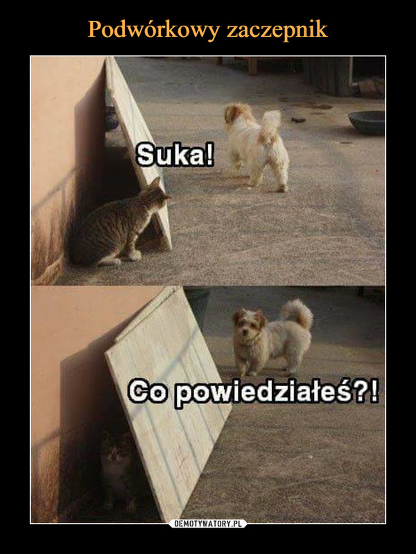 –  Suka!Co powiedziałeś?!