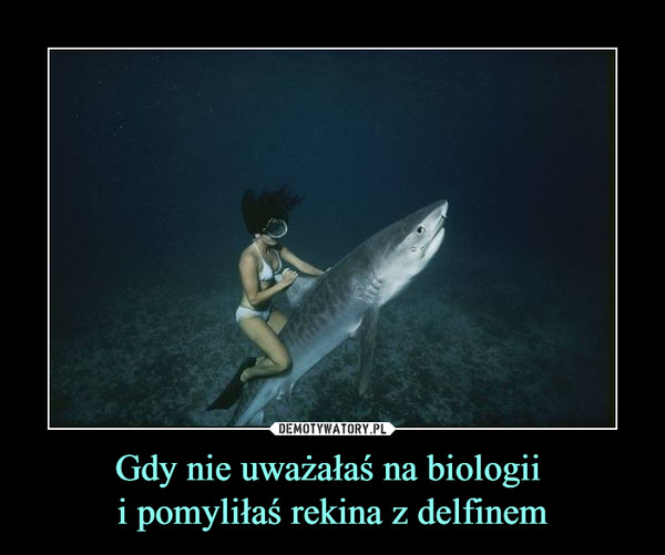 Gdy nie uważałaś na biologii i pomyliłaś rekina z delfinem –