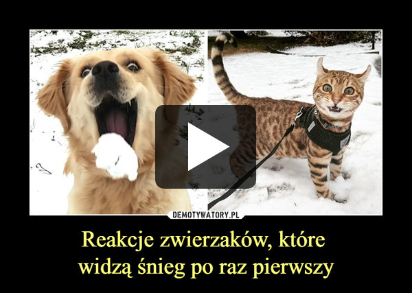 Reakcje zwierzaków, które widzą śnieg po raz pierwszy –