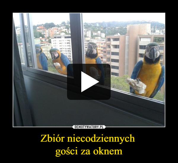 Zbiór niecodziennych gości za oknem –