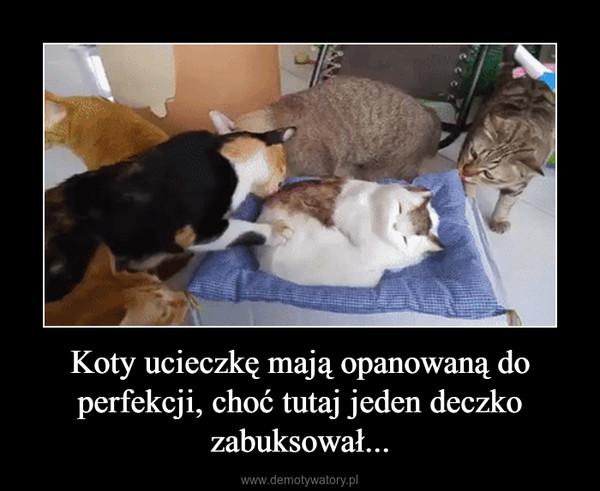 Koty ucieczkę mają opanowaną do perfekcji, choć tutaj jeden deczko zabuksował... –