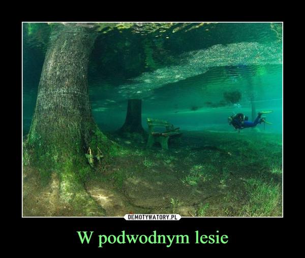 W podwodnym lesie –