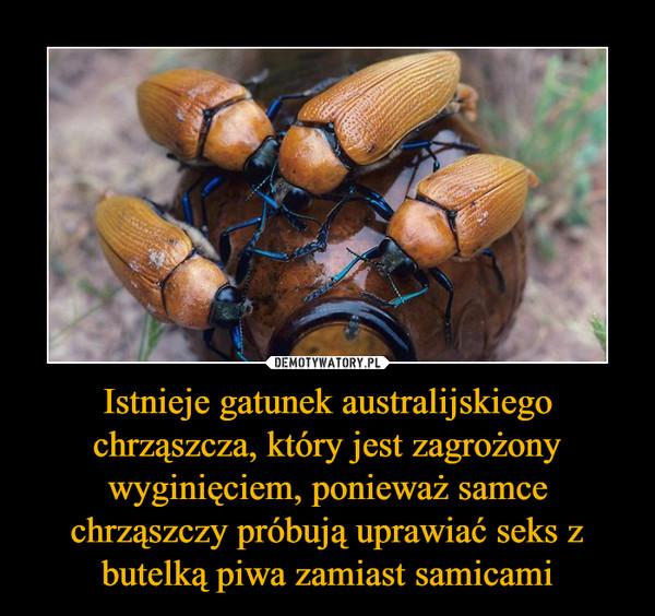 Istnieje gatunek australijskiego chrząszcza, który jest zagrożony wyginięciem, ponieważ samce chrząszczy próbują uprawiać seks z butelką piwa zamiast samicami –