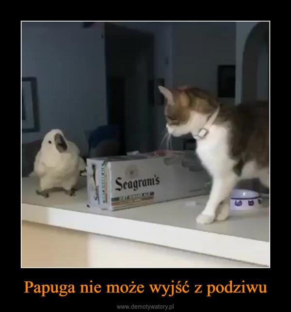 Papuga nie może wyjść z podziwu –