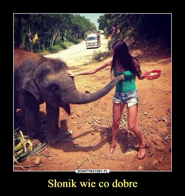 Słonik wie co dobre –