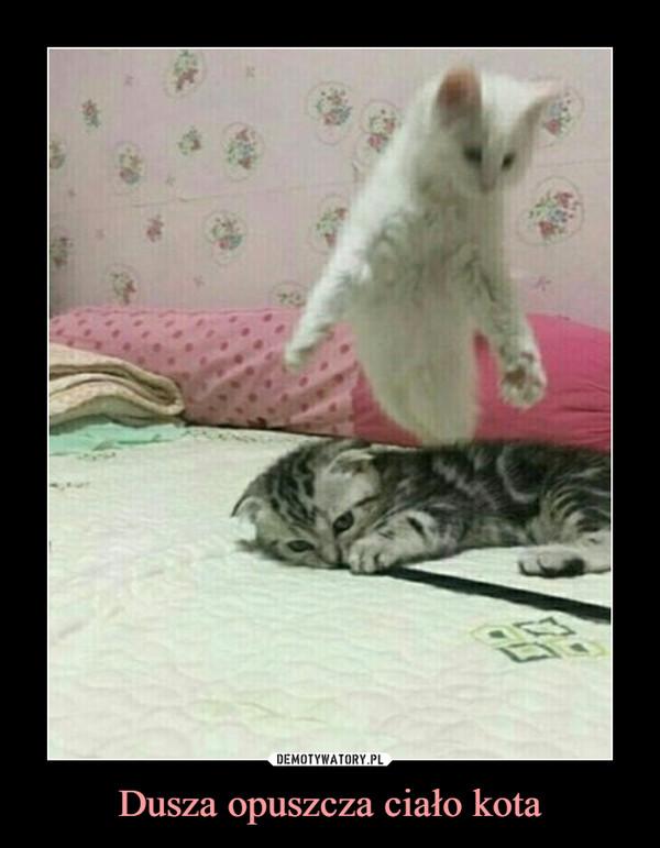 Dusza opuszcza ciało kota –