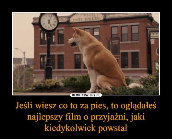 Jeśli wiesz co to za pies, to oglądałeś najlepszy film o przyjaźni, jaki kiedykolwiek powstał –