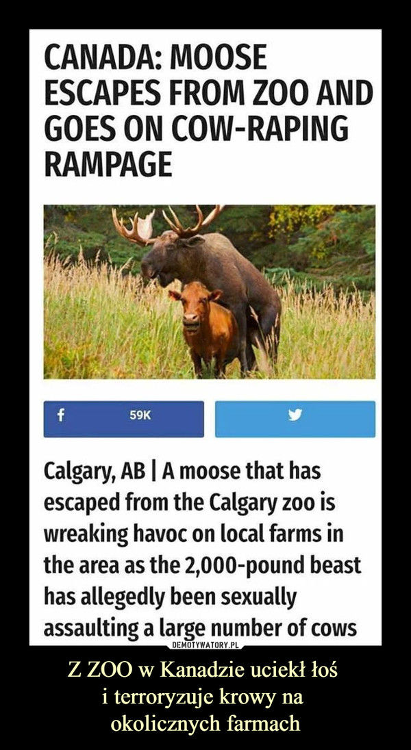 Z ZOO w Kanadzie uciekł łoś i terroryzuje krowy na okolicznych farmach –  Canada: moose escapes from zoo and goes on cow raping rampage.Calgary, a moose that has escaped from the calgary zoo is wreaking havoc on local farms in the area as the 2000 pound beast has allegedly been sexually assaulting a large number of cows