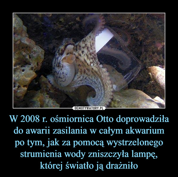 W 2008 r. ośmiornica Otto doprowadziła do awarii zasilania w całym akwarium po tym, jak za pomocą wystrzelonego strumienia wody zniszczyła lampę, której światło ją drażniło –