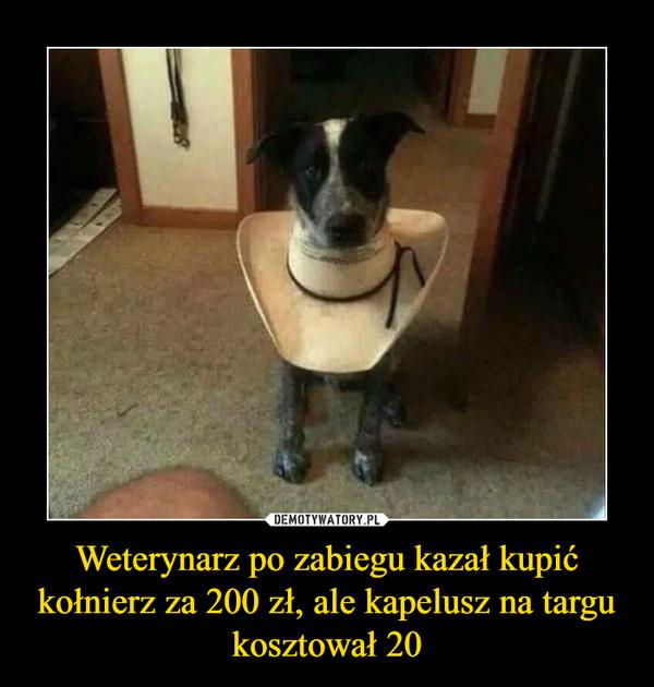 Weterynarz po zabiegu kazał kupić kołnierz za 200 zł, ale kapelusz na targu kosztował 20 –