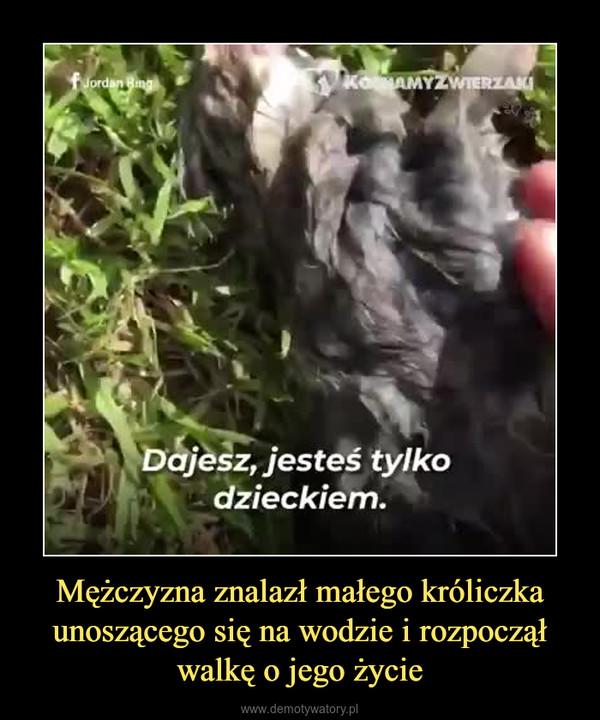 Mężczyzna znalazł małego króliczka unoszącego się na wodzie i rozpoczął walkę o jego życie –