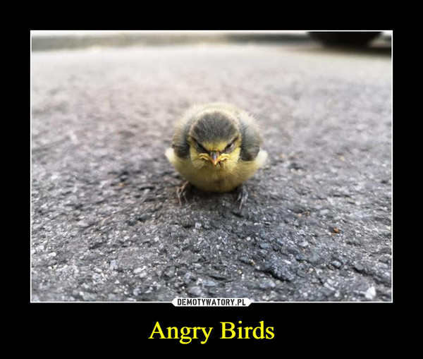 Angry Birds –