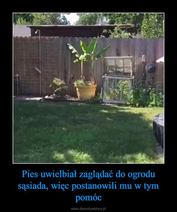 Pies uwielbiał zaglądać do ogrodu sąsiada, więc postanowili mu w tym pomóc –