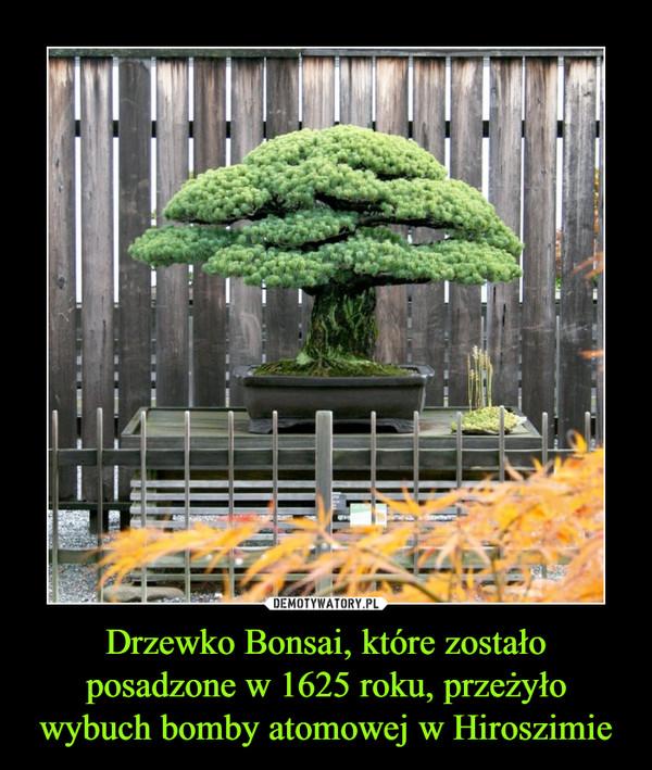 Drzewko Bonsai, które zostało posadzone w 1625 roku, przeżyło wybuch bomby atomowej w Hiroszimie –