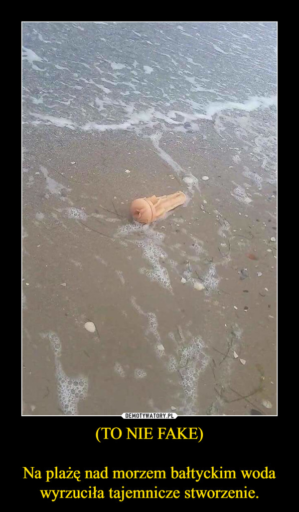 (TO NIE FAKE)Na plażę nad morzem bałtyckim woda wyrzuciła tajemnicze stworzenie. –