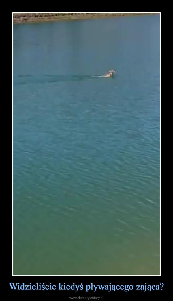 Widzieliście kiedyś pływającego zająca? –