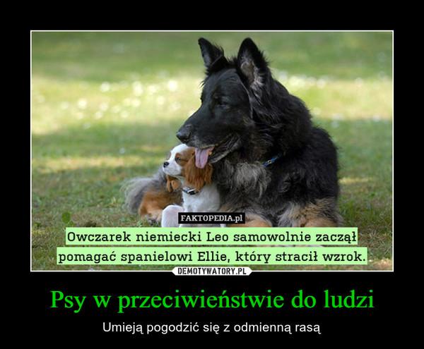 Psy w przeciwieństwie do ludzi – Umieją pogodzić się z odmienną rasą