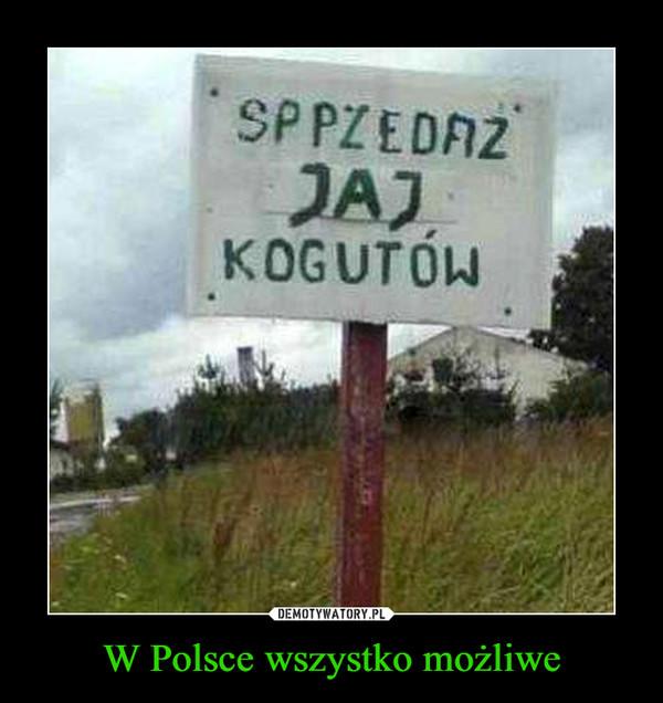 W Polsce wszystko możliwe –