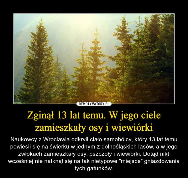 """Zginął 13 lat temu. W jego ciele zamieszkały osy i wiewiórki – Naukowcy z Wrocławia odkryli ciało samobójcy, który 13 lat temu powiesił się na świerku w jednym z dolnośląskich lasów, a w jego zwłokach zamieszkały osy, pszczoły i wiewiórki. Dotąd nikt wcześniej nie natknął się na tak nietypowe """"miejsce"""" gniazdowania tych gatunków."""