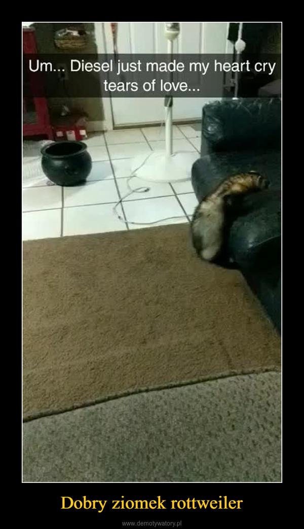 Dobry ziomek rottweiler –