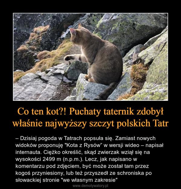 """Co ten kot?! Puchaty taternik zdobył właśnie najwyższy szczyt polskich Tatr – – Dzisiaj pogoda w Tatrach popsuła się. Zamiast nowych widoków proponuję """"Kota z Rysów"""" w wersji wideo – napisał internauta. Ciężko określić, skąd zwierzak wziął się na wysokości 2499 m (n.p.m.). Lecz, jak napisano w komentarzu pod zdjęciem, być może został tam przez kogoś przyniesiony, lub też przyszedł ze schroniska po słowackiej stronie """"we własnym zakresie"""""""