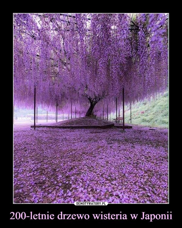 200-letnie drzewo wisteria w Japonii –