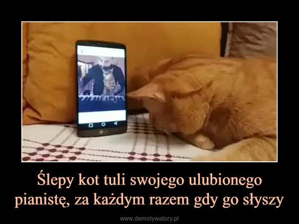 Ślepy kot tuli swojego ulubionego pianistę, za każdym razem gdy go słyszy –