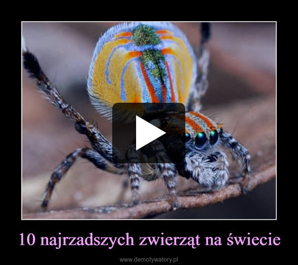 10 najrzadszych zwierząt na świecie –