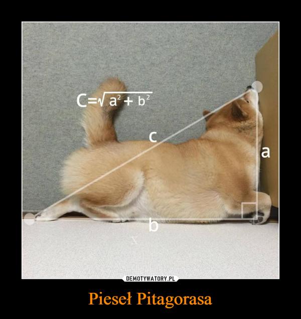 Pieseł Pitagorasa –