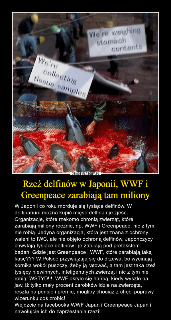 Rzeź delfinów w Japonii, WWF i Greenpeace zarabiają tam miliony – W Japonii co roku morduje się tysiące delfinów. W delfinarium można kupić mięso delfina i je zjeść. Organizacje, które rzekomo chronią zwierząt, które zarabiają miliony rocznie, np. WWF i Greenpeace, nic z tym nie robią. Jedyna organizacja, która jest znana z ochrony waleni to IWC, ale nie objęło ochroną delfinów. Japończycy chwytają tysiące delfinów i je zabijają pod pretekstem badań. Gdzie jest Greenpeace i WWF, które zarabiają taką kasę??? W Polsce przywiązują się do drzewa, bo wycinają kornika wokół puszczy, żeby ją ratować, a tam jest taka rzeź tysięcy niewinnych, inteligentnych zwierząt i nic z tym nie robią! WSTYD!!!! WWF okryło się hańbą, kiedy wyszło na jaw, iż tylko mały procent zarobków idzie na zwierzęta, reszta na pensje i premie, mogliby chociaż z chęci poprawy wizerunku coś zrobic!Wejdźcie na facebooka WWF Japan i Greenpeace Japan i nawołujcie ich do zaprzestania rzezi!