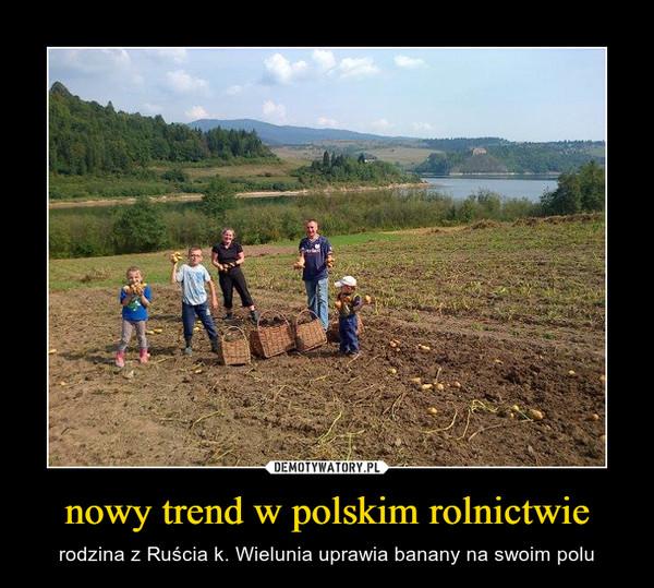 nowy trend w polskim rolnictwie – rodzina z Ruścia k. Wielunia uprawia banany na swoim polu