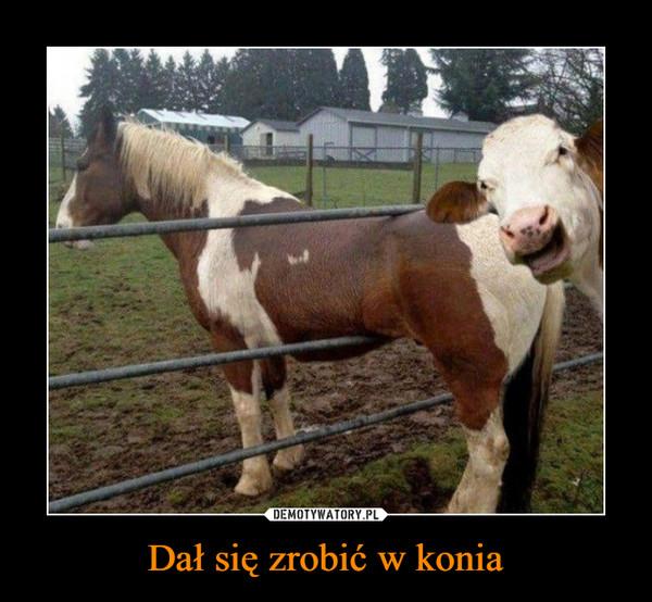 Dał się zrobić w konia –