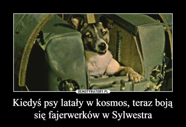 Kiedyś psy latały w kosmos, teraz boją się fajerwerków w Sylwestra –