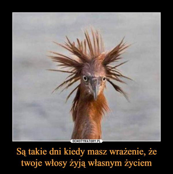 Są takie dni kiedy masz wrażenie, że twoje włosy żyją własnym życiem –