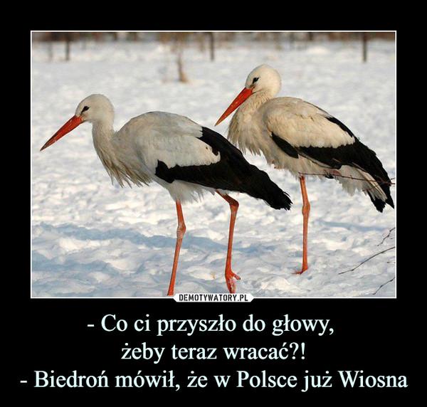 - Co ci przyszło do głowy, żeby teraz wracać?!- Biedroń mówił, że w Polsce już Wiosna –