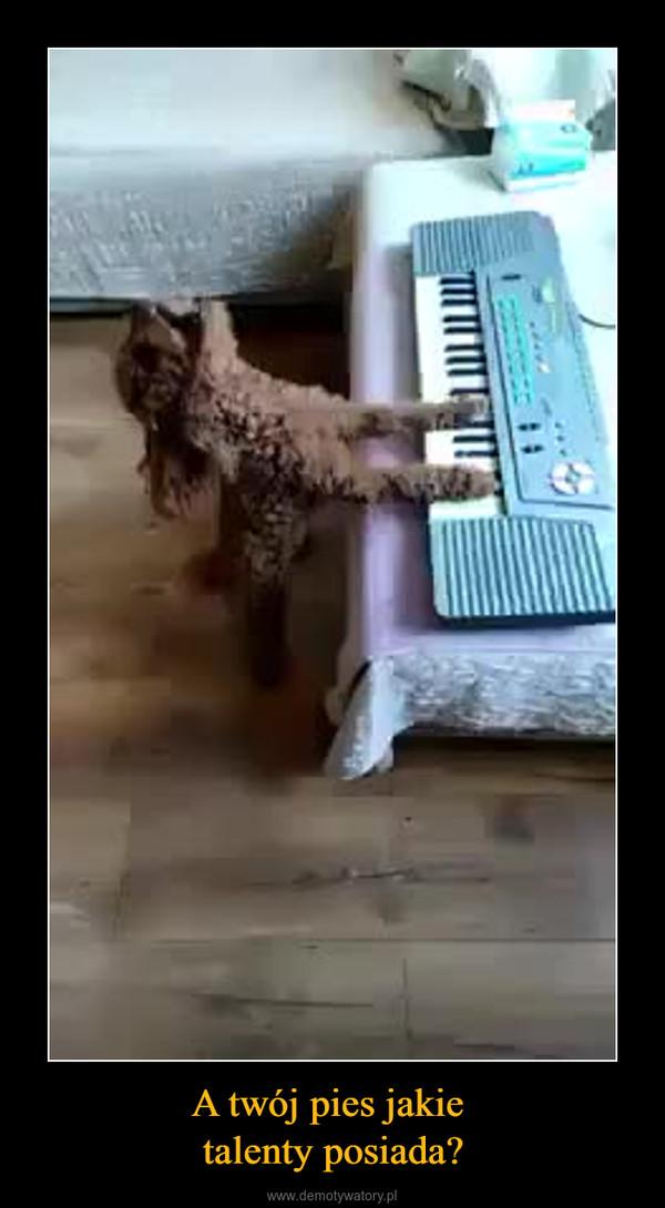 A twój pies jakie talenty posiada? –