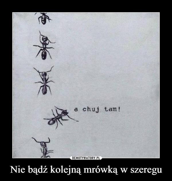Nie bądź kolejną mrówką w szeregu –