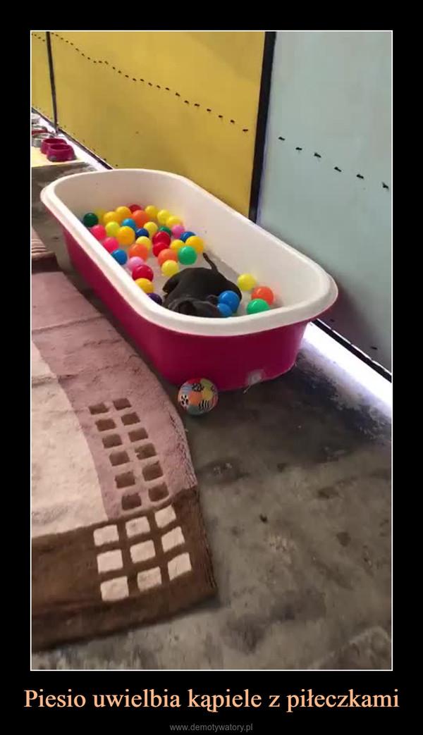 Piesio uwielbia kąpiele z piłeczkami –