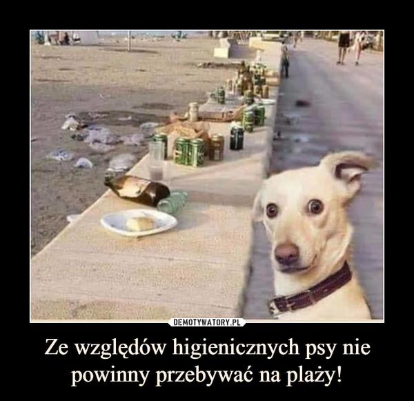 Ze względów higienicznych psy nie powinny przebywać na plaży! –