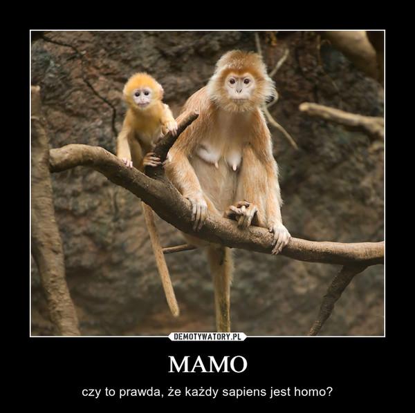 MAMO – czy to prawda, że każdy sapiens jest homo?