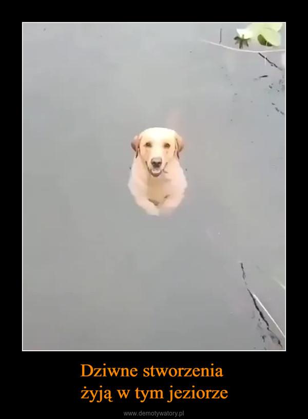 Dziwne stworzenia żyją w tym jeziorze –