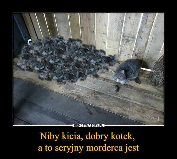 Niby kicia, dobry kotek, a to seryjny morderca jest –