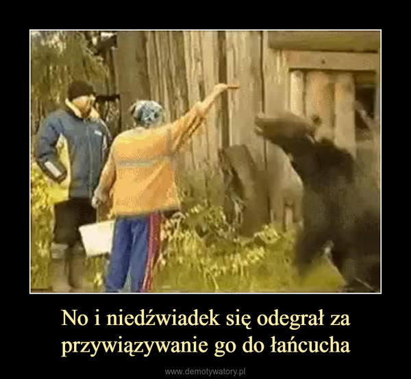 No i niedźwiadek się odegrał za przywiązywanie go do łańcucha –