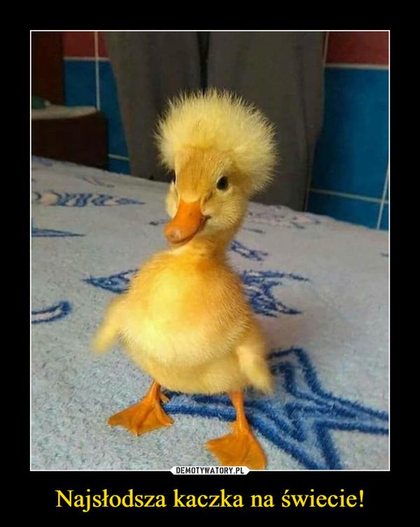 Najsłodsza kaczka na świecie! –